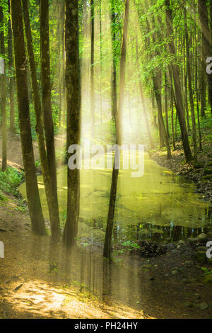 Forest with pond - Stock Image