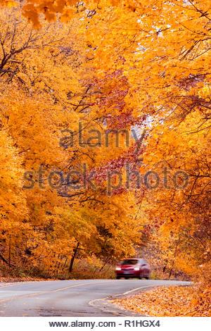 Driving tour through peak autumn colour road through the eastern deciduous Carolinian forest in fall in Toronto Ontario Canada - Stock Image