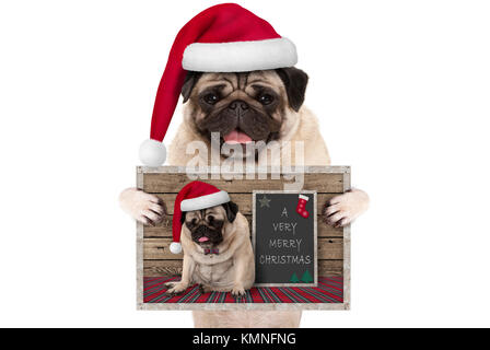 cute smiling Christmas pug dog with santa hat, holding up greeting card with selfportrait, isolated on white background - Stock Image