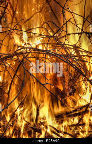 Bonfire - Stock Image