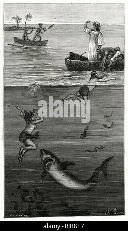 Mother of pearl divers attacked by a shark, Tahiti. - Stock Image