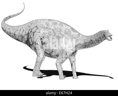 Dinosaurier Dicraeosaurus / dinosaur Dicraeosaurus - Stock Image