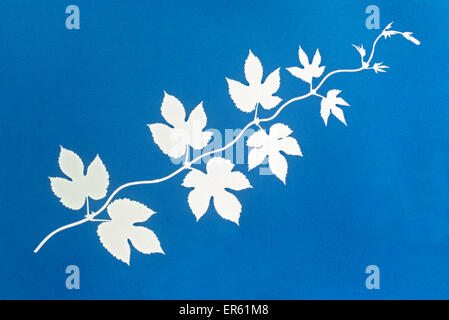 Cyanotype blueprint of golden hop leaves. Gives white negative image on a blue background Process invented by Sir - Stock Image