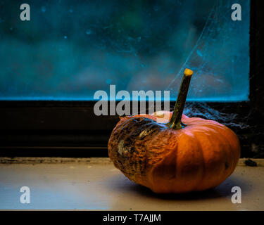 Abstract still life displaying rotting pumpkin by the window covered with spider net viewed from the side with plenty of copyspace - Halloween or need - Stock Image