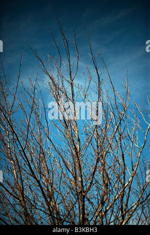 Branches in spring - Stock Image