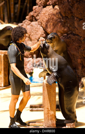 Sea lion with trainer - Stock Image