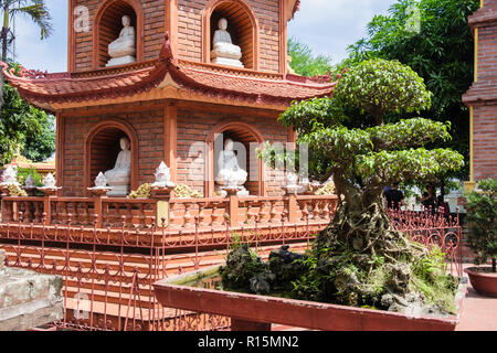 Bonsai tree by Tran Quoc Pagoda in temple comlpex. Hanoi, Vietnam, Asia - Stock Image