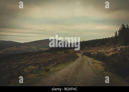 Vanishing Woodland in Wicklow National Park. Chopped trees and bare landscape around Seefin Mountain. County Wicklow, Ireland - Stock Image