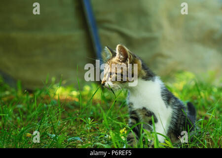Kitten, sitting in the grass, in the shade, and looking aside, is partially lit by the warm sunlight. Selective focus on its head. - Stock Image