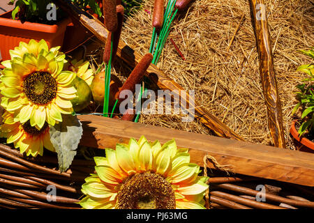 Autumn antique wagon with pumpkins and sunflower. - Stock Image