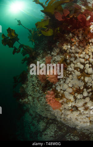 Browning Pass Reef - Stock Image