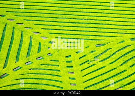 aerial, canola 'crop art', Cutknife, Saskatchewan - Stock Image