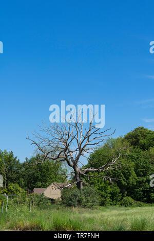 Dead tree vertical - Stock Image