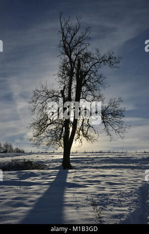 Following a heavy snowfall the fields around the north Oxfordshire village of Hook Norton lie under about 6 inches/ - Stock Image