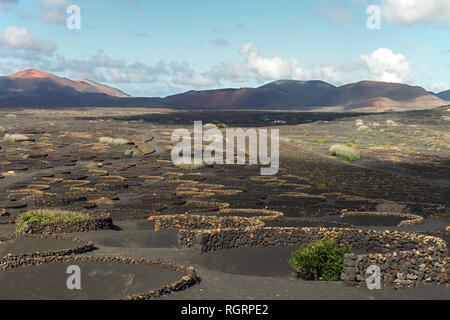 The valley of La Geria is Lanzarote's main wine-growing region and has been declared a 'Protected Area'. Much is made from the Malvasía grape. - Stock Image