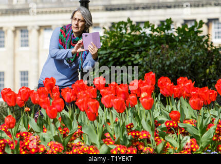 Bath, Somerset, UK, 29th March, 2019. A woman is pictured using her mobile phone to take a photograph of colourful Tulips in Royal Victoria Park. Credit:  Lynchpics/Alamy Live News - Stock Image