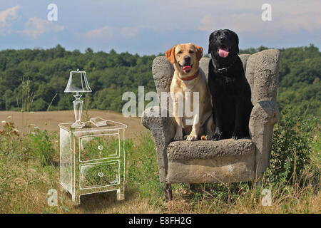 Conceptual image of dogs sitting in a living room - Stock Image