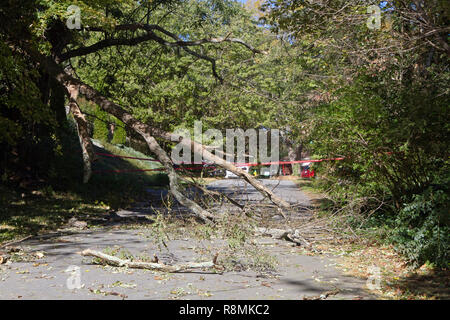 A dead tree falls, shattering onto a narrow road completely blocking it with broken branches and scattered debris - Stock Image