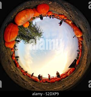 Pumpkin patch 360 - Stock Image