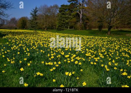 Hughenden Park, Buckinghamshire. 29th Mar 2019. UK Weather: UK Weather: Sunny day in Hughenden Park, Buckinghamshire, UK Credit: Susie Kearley/Alamy Live News - Stock Image