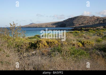 Punta Cormorant Beach, Floreana Island, Galapagos Islands, Ecuador, South America - Stock Image