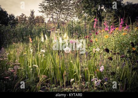 wild flower garden, Botanic gardens, Glasgow - Stock Image