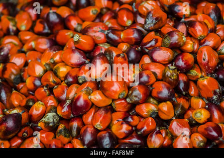 Palm kernels for the production of palm oil in Sierra Leone. - Stock Image