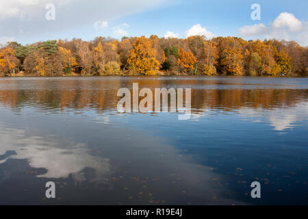 autumn, the Tarn, Puttenham, nr Godalming & Guildford, Surrey, England - Stock Image