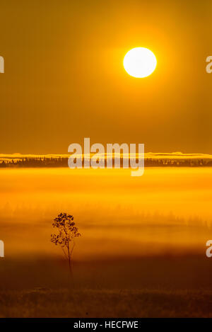 Colorful sunrise and morning mist - Stock Image