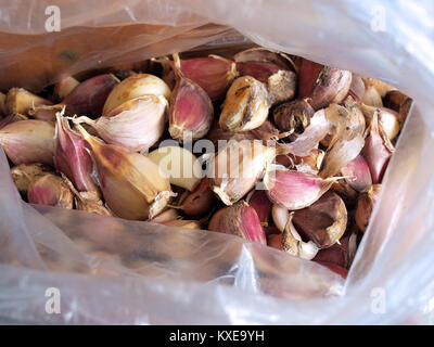 Plastic bag with red garlic cloves for planting close up - Stock Image