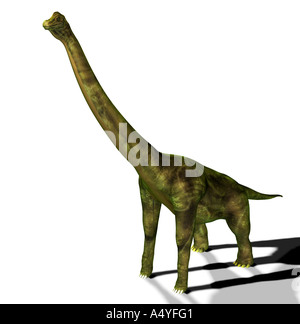 The brachiosaurus seemed also to arm lizard mentioned in the jurassic, had a weight of approx. 80 tons, a length - Stock Image