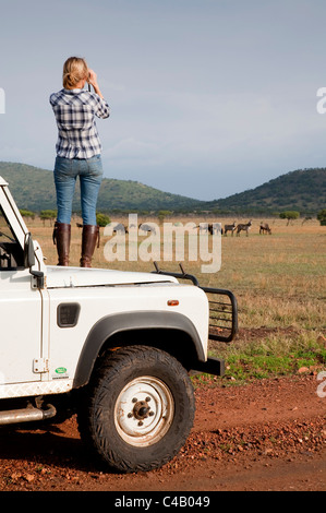 Tanzania, Serengeti. A tourist stands on the bonnet of her Land Rover to look at the wildebeest. MR. - Stock Image