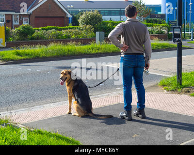 A man with a well behaved Alsatian Dog waiting for the lights to stop traffic at a pedestrian crossing on a main road - Stock Image