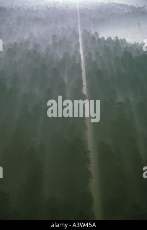 Aerial landscape of road with fog and trees - Stock Image