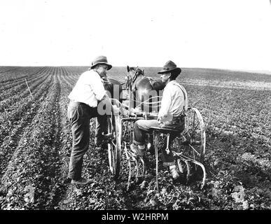 Farmers talking in field, one taking a break from plowing or planting ca. 1936 - Stock Image