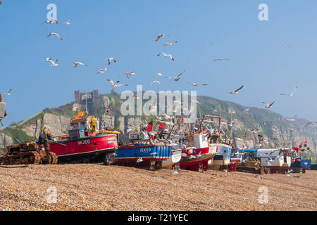 Hastings, East Sussex, UK. Seagulls swirl round Hastings fishing boats the Old Town Stade fishermen's beach. - Stock Image