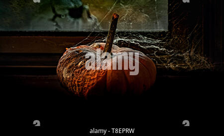 Abstract still life displaying rotting pumpkin by the window covered with spider net viewed from the side, and a skull on the other side - Halloween c - Stock Image