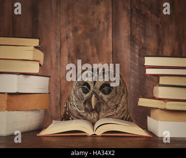 An owl animal with glasses is reading a book in the woods for an education or school concept. - Stock Image