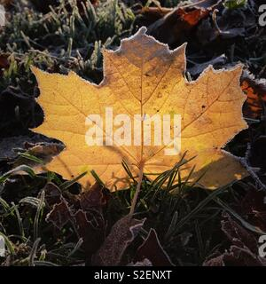 Frozen Leaf In Autumn - Stock Image