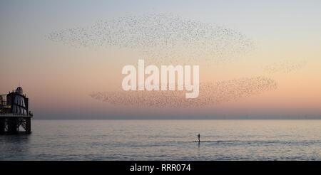 Brighton, UK. 26th Jan, 2019. Starlings explode in the skies above a paddle boarder off Brighton beach this evening as they perform their daily murmuration as the unusually warm sunny weather continues throughout Britain with some areas reaching over 20 degrees centigrade again Credit: Simon Dack/Alamy Live News - Stock Image