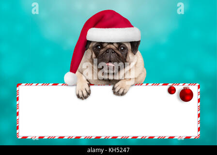 cute smiling Christmas pug puppy dog with santa hat, hanging with paws on blank sign. on blue background - Stock Image
