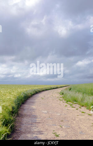 an empty path, leading into nowhere through grainfields - Stock Image