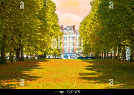 Autumn scene, an avenue lined with trees in Green Park, London during sunset - Stock Image