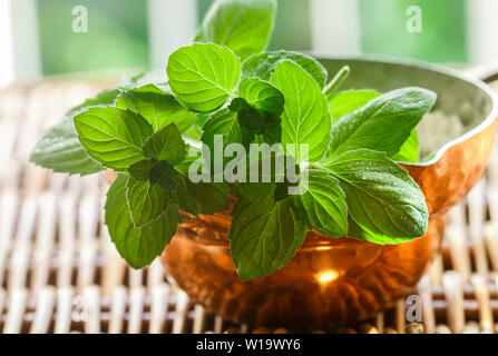 Fresh green organic sprigs of mint. Peppermint. Spicy herbs. Seasoning. Selective focus - Stock Image