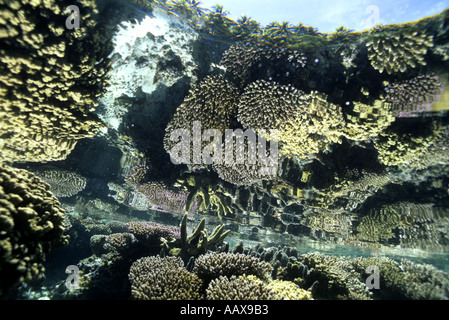 coral reef reflection seen from underwater in the Western Pacific - Stock Image