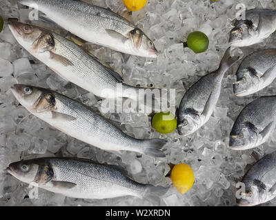 Gilt-Head Bream, Dorado fish and Sea Bass fish on ice cubes before cooking - Stock Image