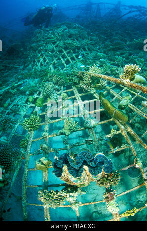 'Lotus', an artificial reef built in 2001 with a steel frame with a mild electrical current which encourages the growth of coral,  Ihuru Island, North Male Atoll, Maldives, Indian Ocean. Small reproduction only. - Stock Image