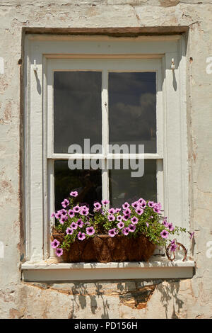 A classic farmhouse window with a blooming flower box, New Holland, Lancaster County, Pennsylvania, USA - Stock Image