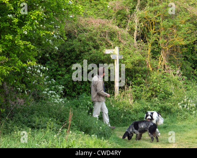 A man with two dogs walks towards Culham from Abingdon on the Thames tow path. - Stock Image