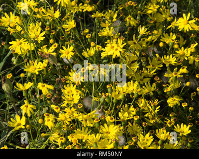 Yellow flower close up - Stock Image